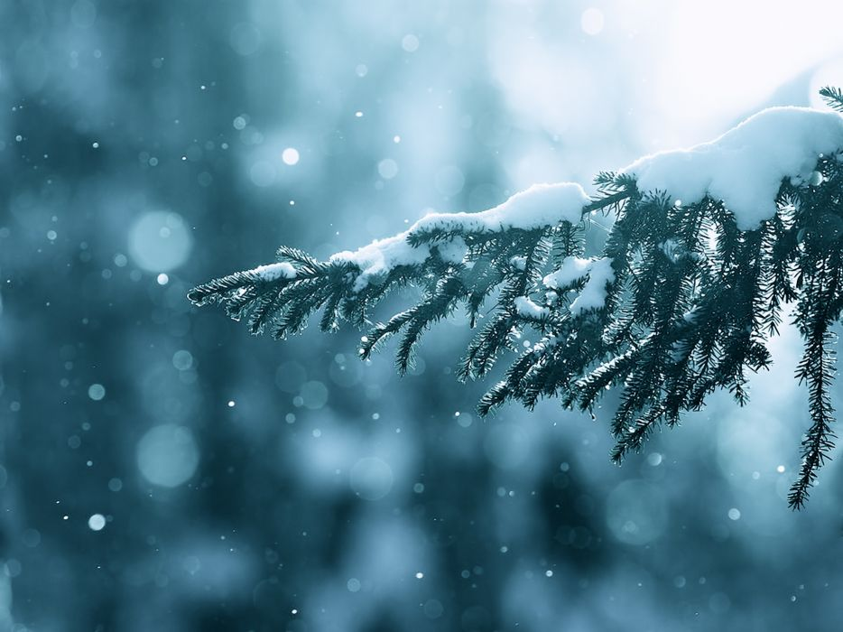 Winter (season) snow trees lens flare bokeh depth of field branches wallpaper