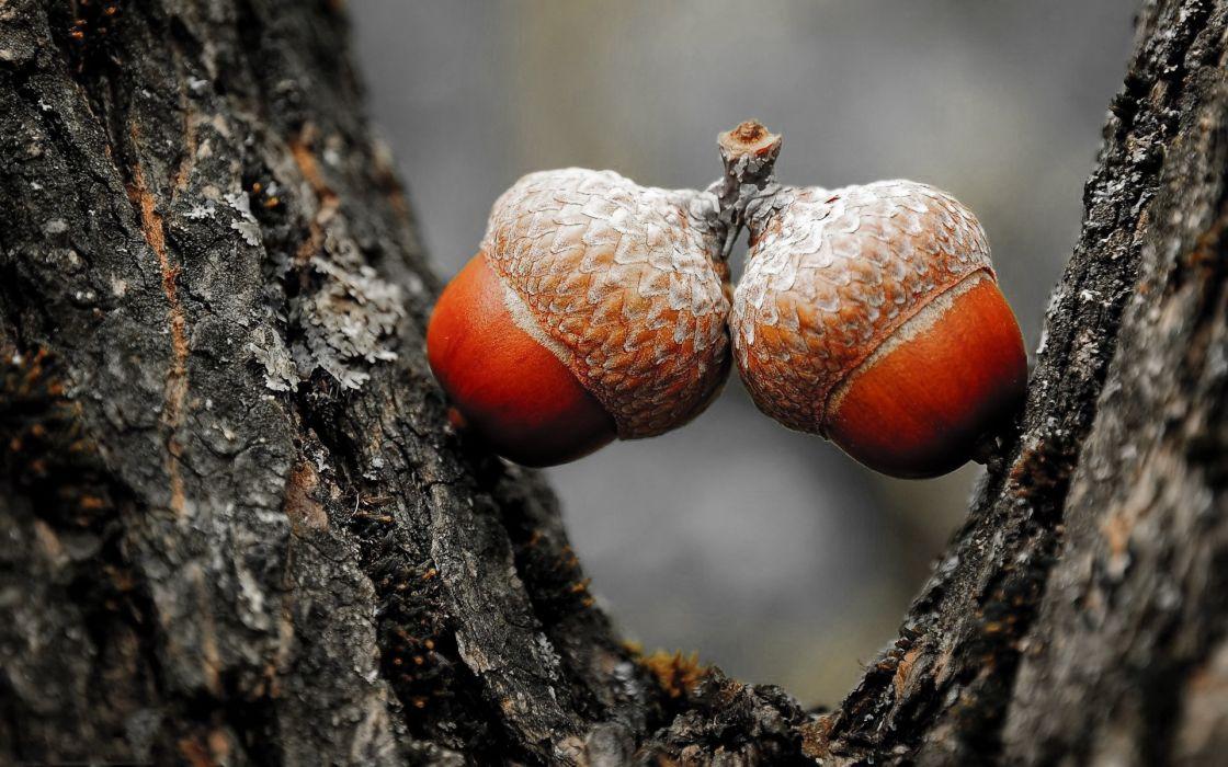 Nature trees acorns wallpaper