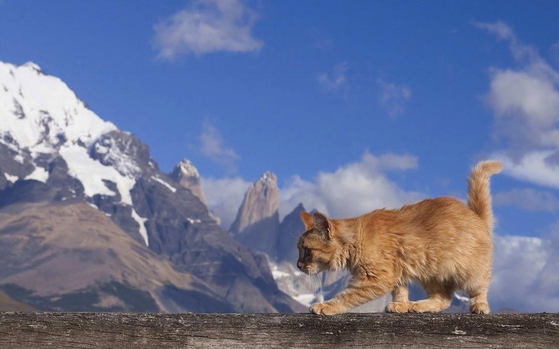 Mountains cats animals wallpaper