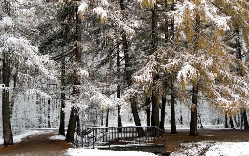 Nature winter (season) snow trees forest wallpaper