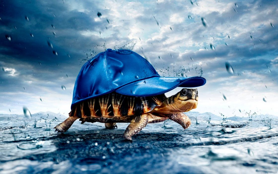 Animals tortoise baseball caps wallpaper