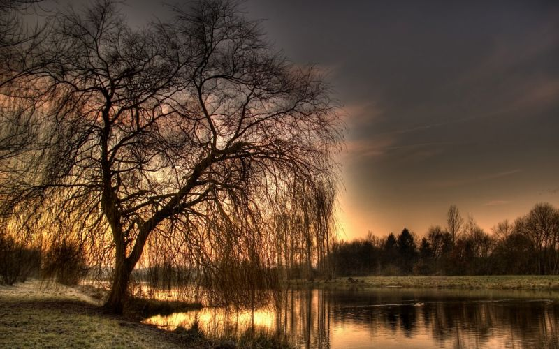 Trees hdr photography wallpaper
