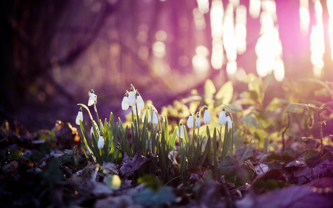 Nature forest plants macro ground wallpaper