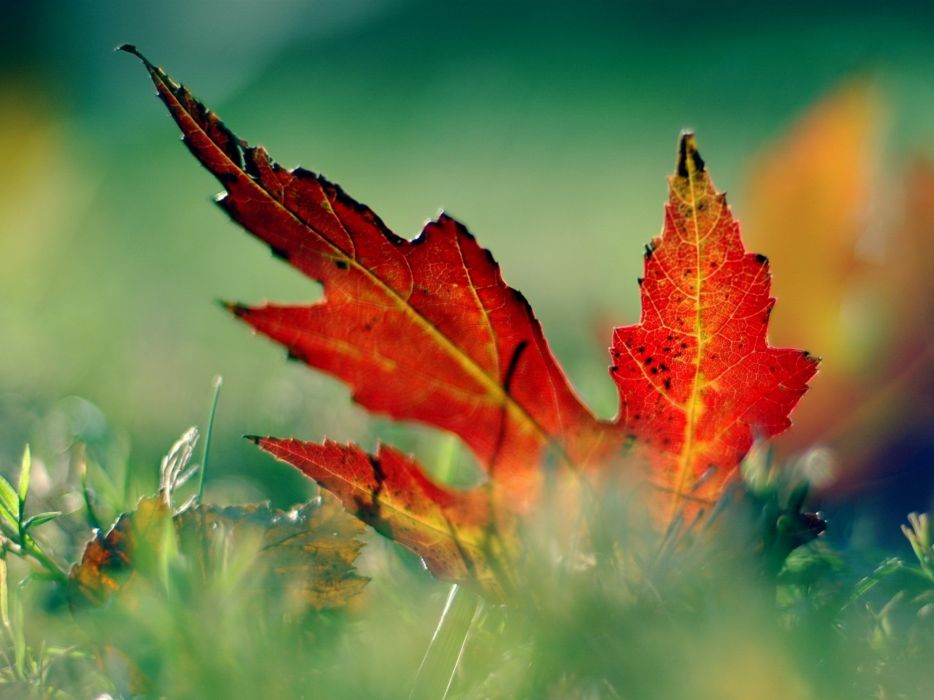 Nature leaves fallen leaves wallpaper