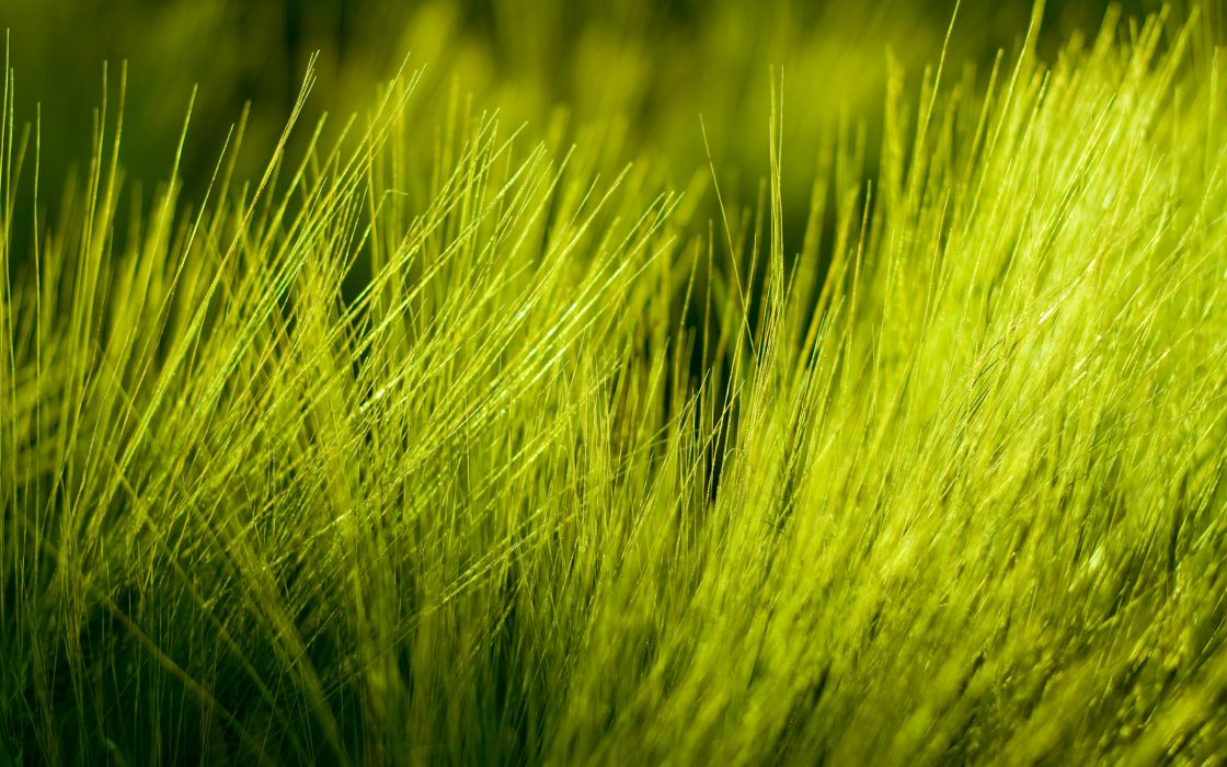 Green nature grass plants wallpaper