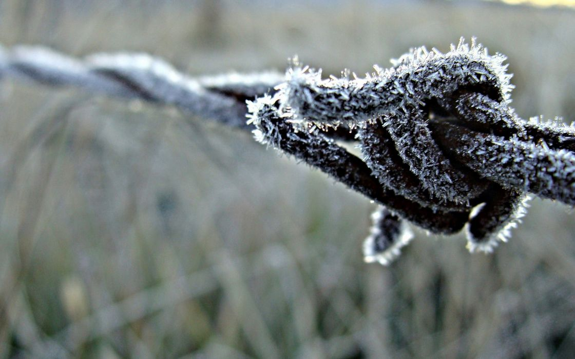 Ice nature fences frost macro depth of field barbed wire wire wallpaper