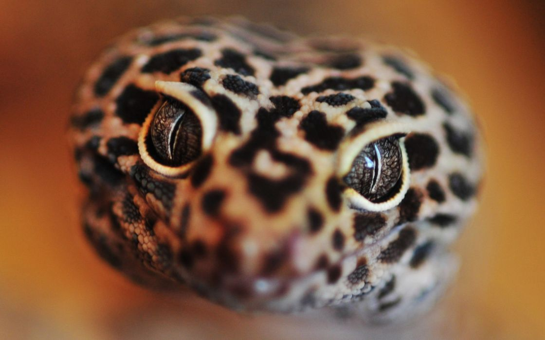 Eyes focus lizards dots faces wallpaper