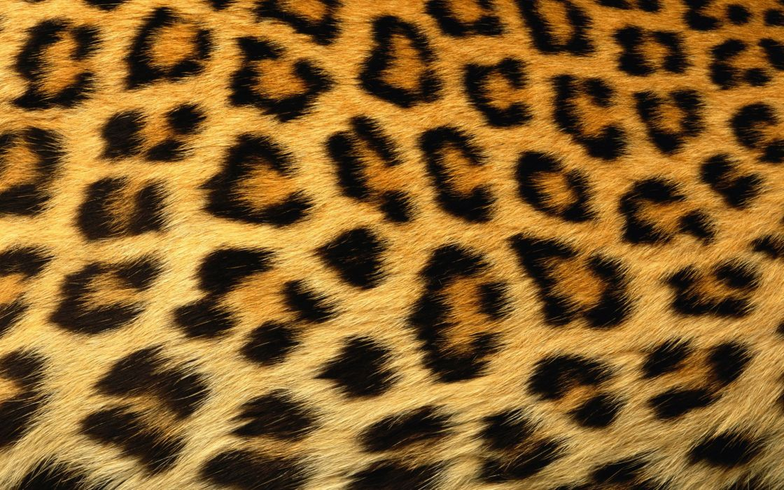 Abstract skin leopard print wallpaper
