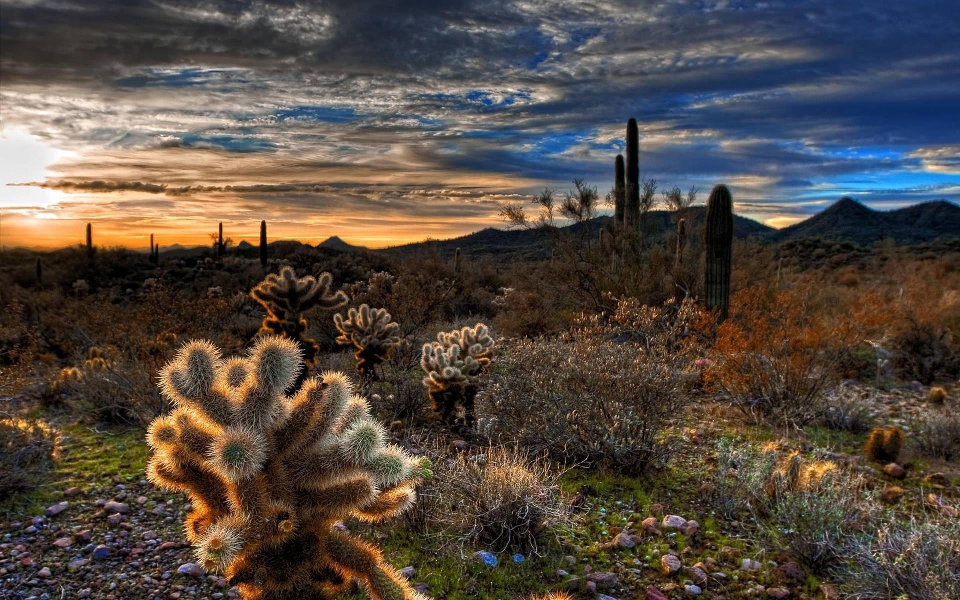 Пустынные холмы  № 1912701 бесплатно