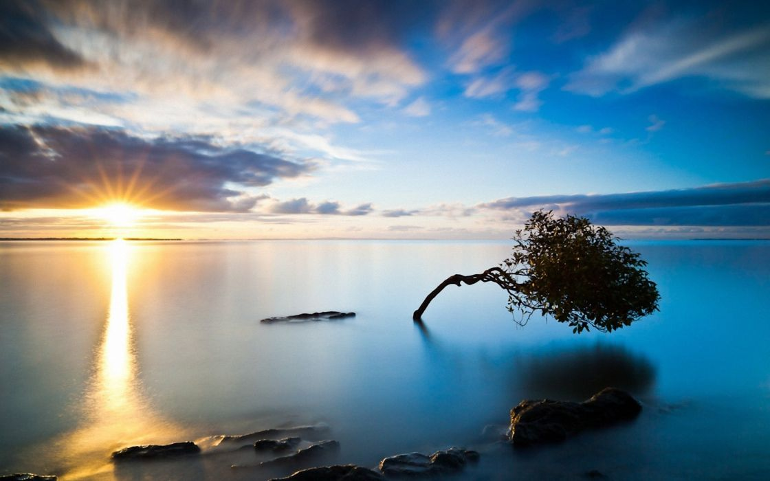 Sunset trees seas seascapes skyscapes wallpaper