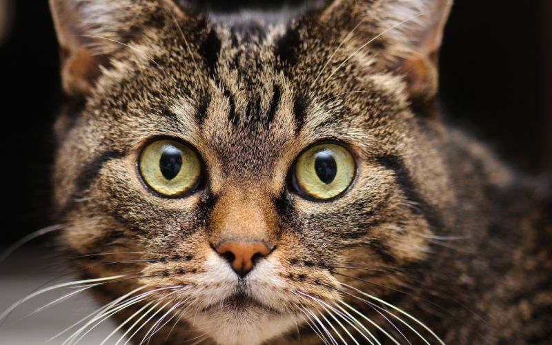 Cats animals hdr photography wallpaper