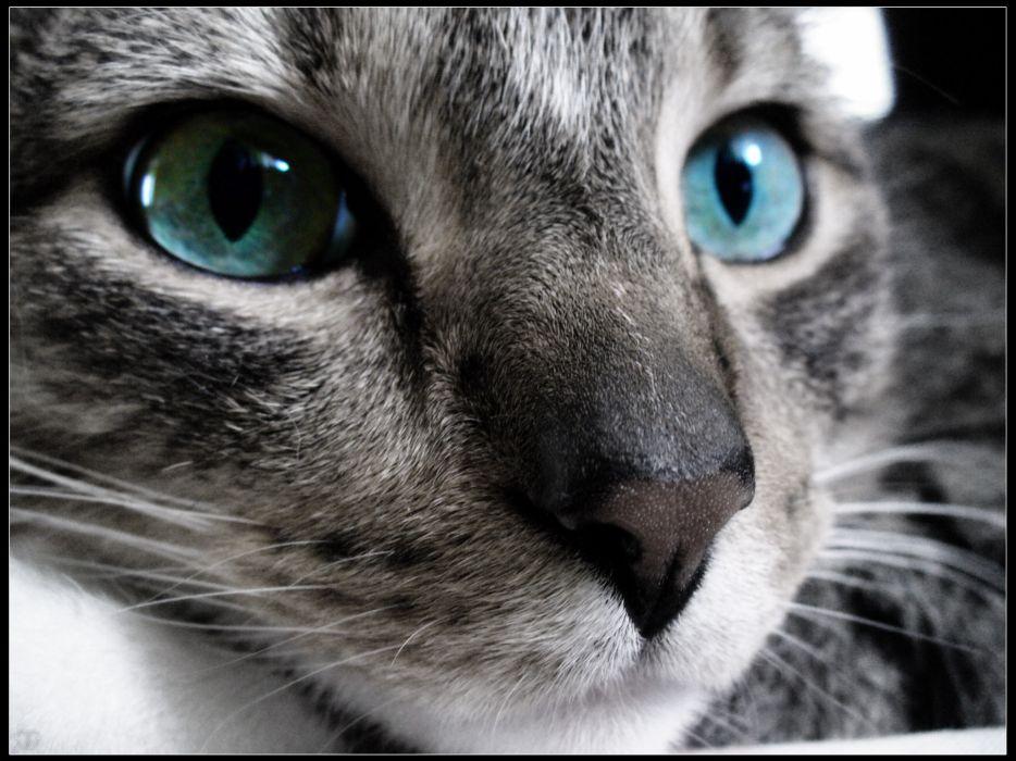 Cats stare wallpaper