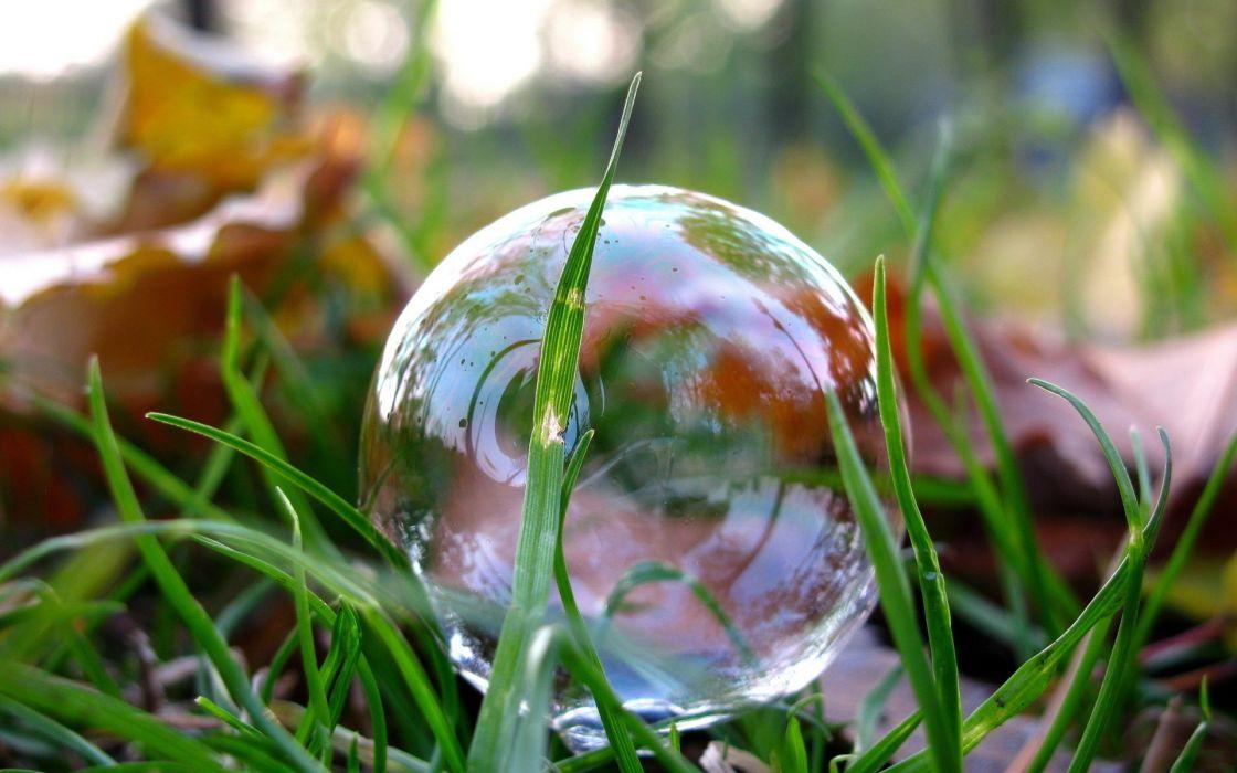 Nature grass bubbles wallpaper