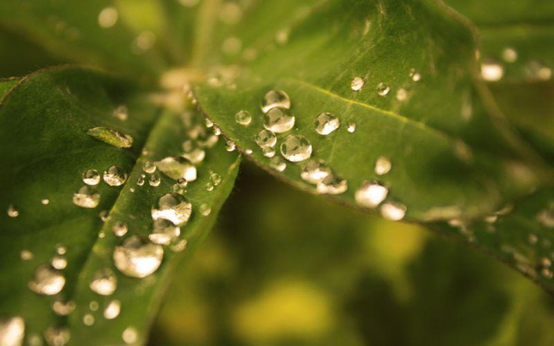 Nature leaves plants water drops macro focused wallpaper