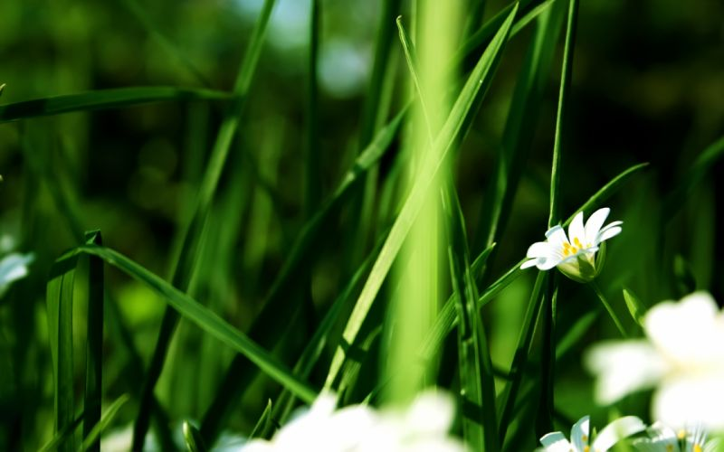 Nature flowers grass summer (season) wallpaper