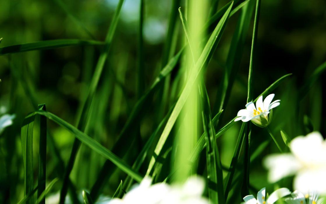 Nature flowers grass summer (season) wallpaper