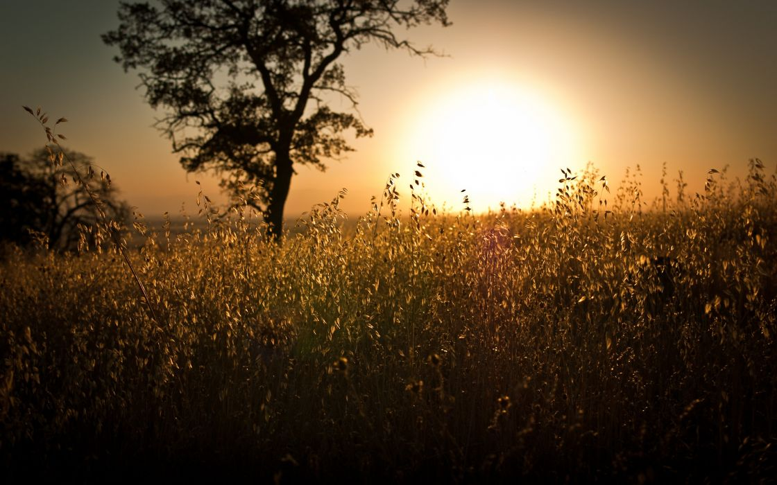 Sunset landscapes nature sun trees skylines day fields sunlight wallpaper