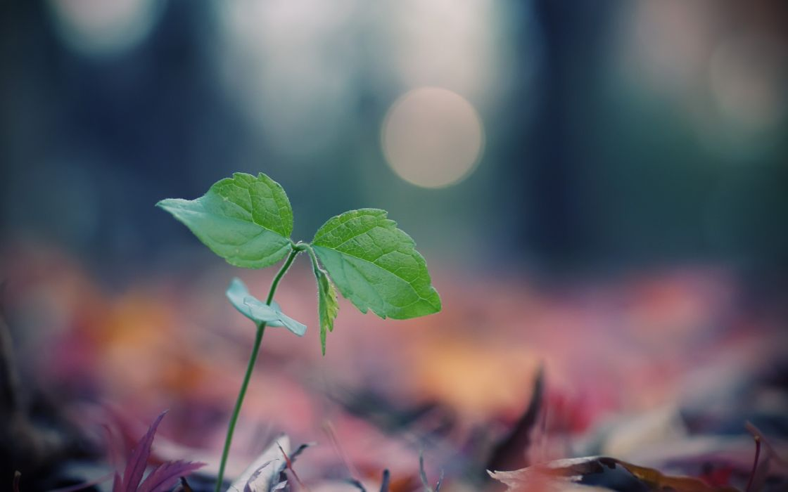 Nature leaves plants macro wallpaper