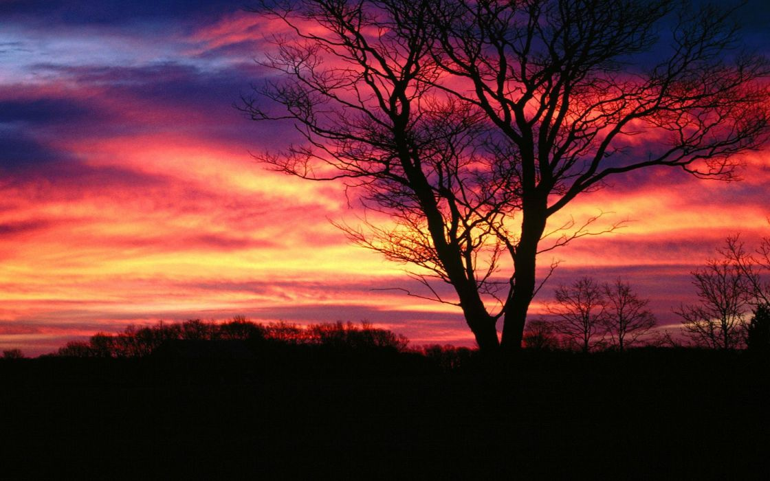 Sunset trees multicolor skyscapes wallpaper