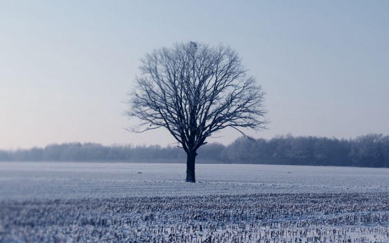 Landscapes winter (season) snow trees forest wallpaper