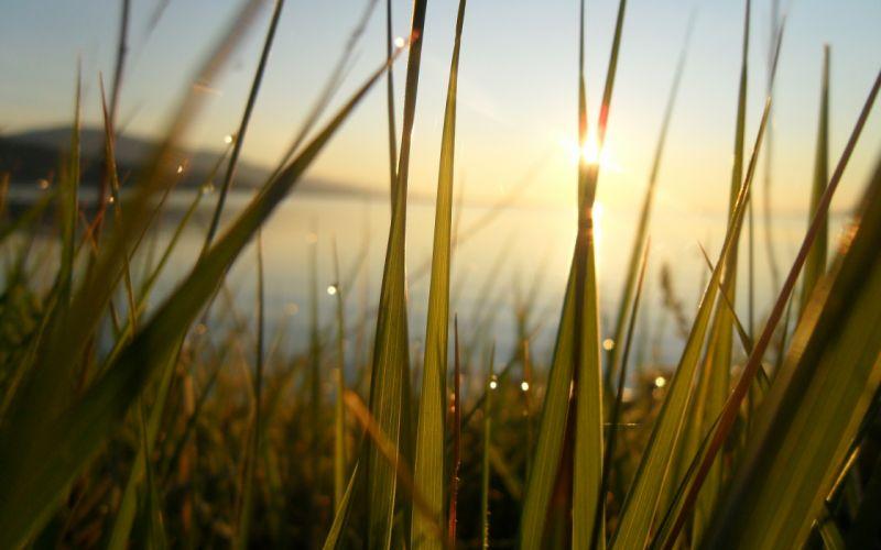 Nature grass sunlight wallpaper