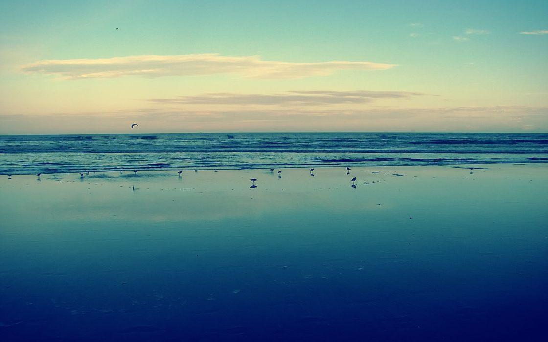 Water ocean landscapes seagulls wallpaper