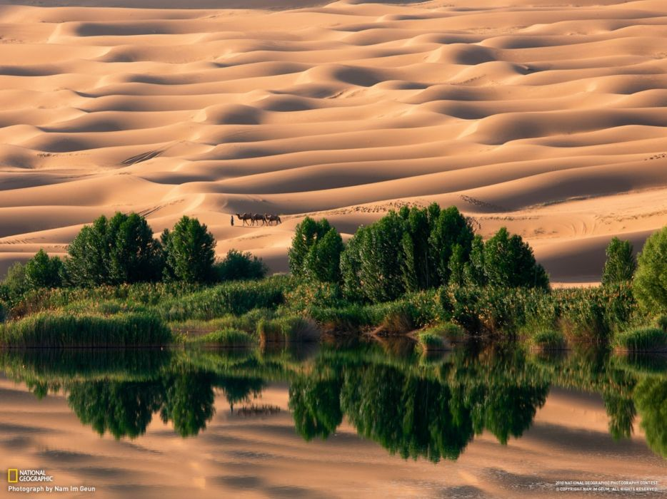 Landscapes nature desert national geographic oasis camels sand dunes reflections wallpaper