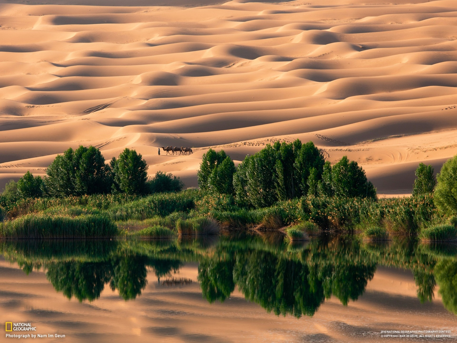 Landscapes nature desert national geographic oasis camels ... Oasis Geography