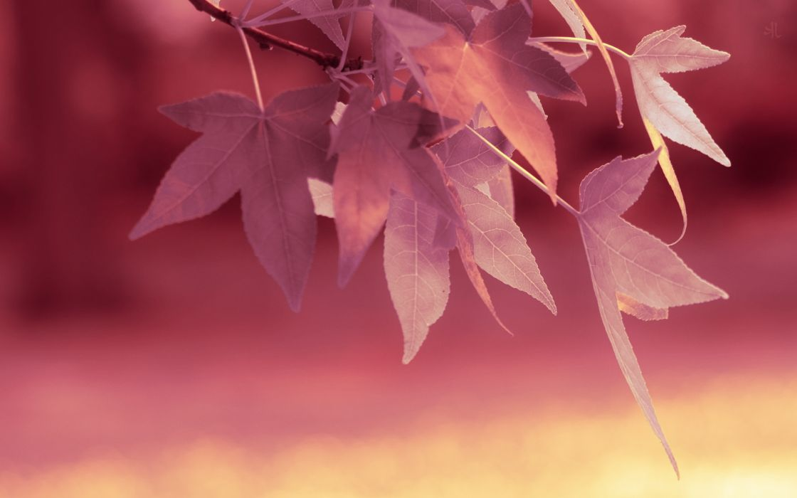 Trees leaves wallpaper