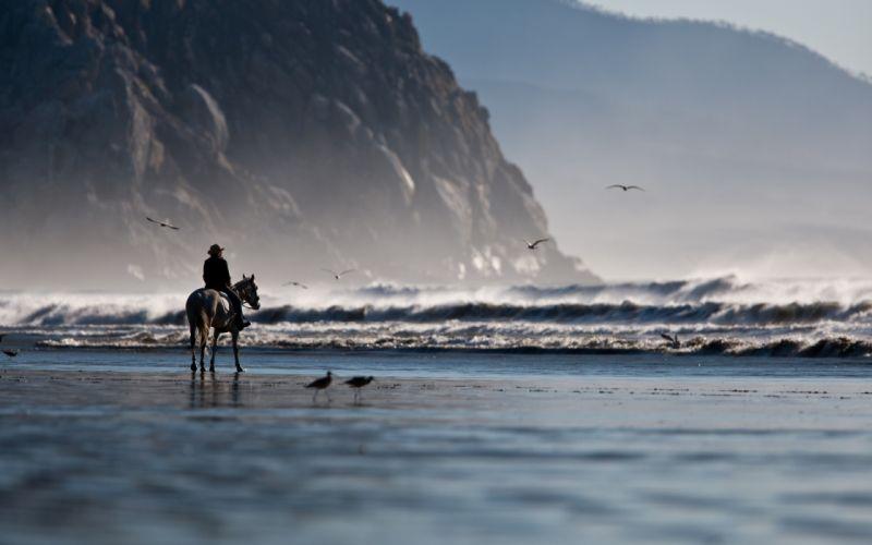 Water beach seas shore horses wallpaper