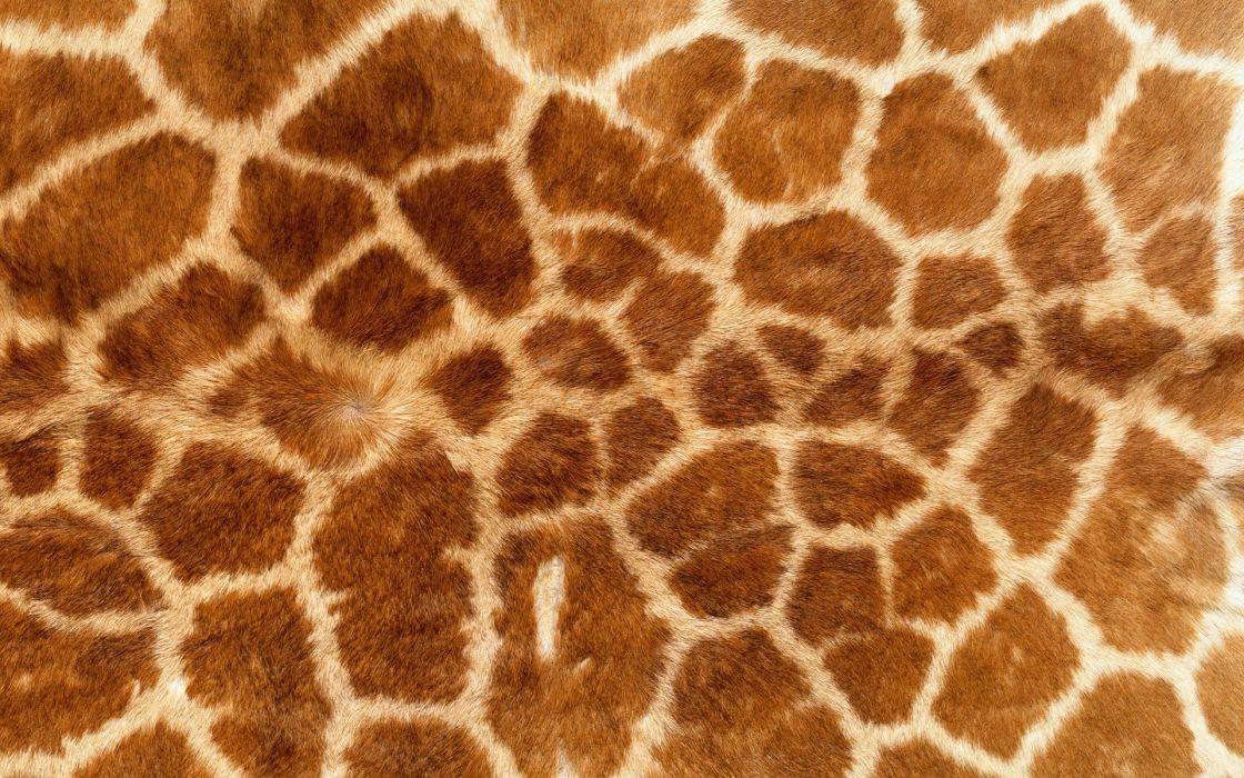 Abstract multicolor textures giraffes wallpaper