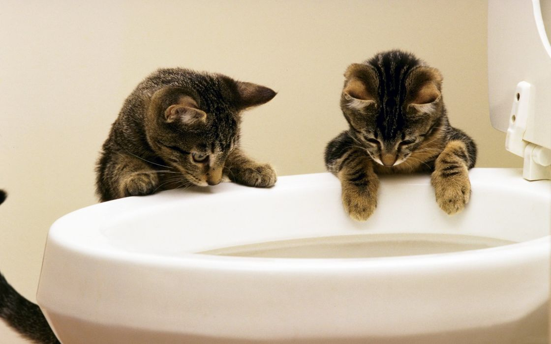 Cats animals kittens toilets wallpaper