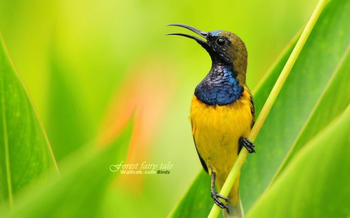 Birds wildlife wallpaper