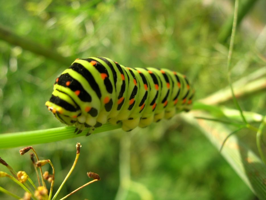 Insects caterpillars bugs wallpaper