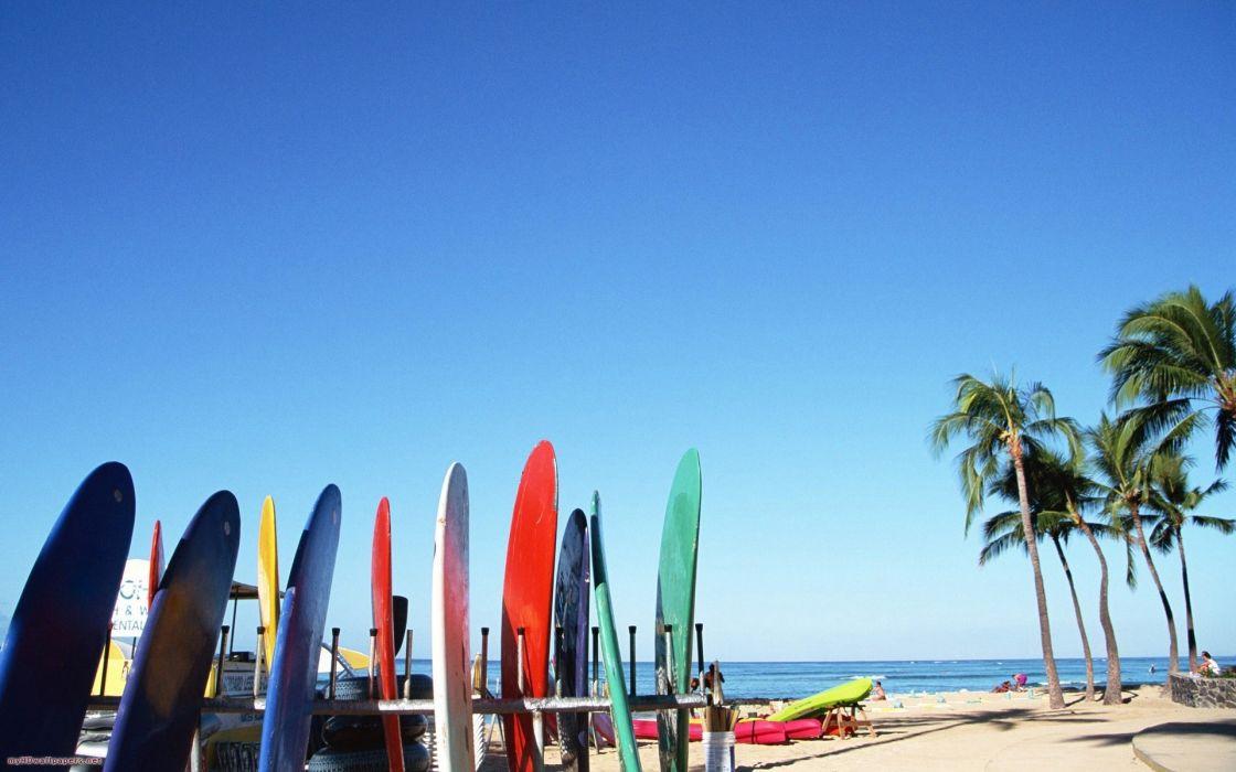 Beach surfboards palm trees wallpaper