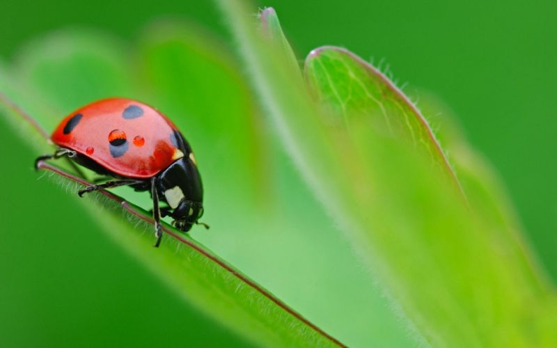 Up nature red animals grass macro ladybirds wallpaper