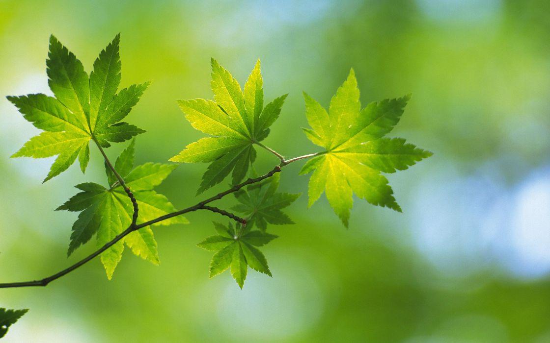 Nature leaf leaves plants wallpaper