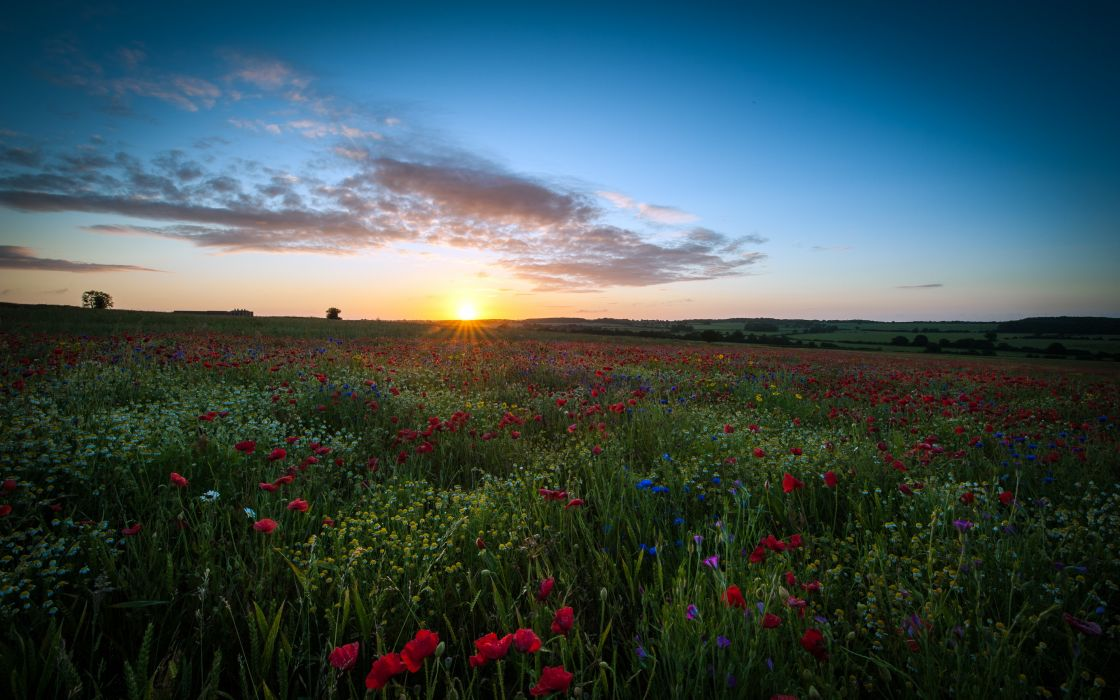 Clouds landscapes nature sun dawn flowers fields united kingdom poppies wallpaper