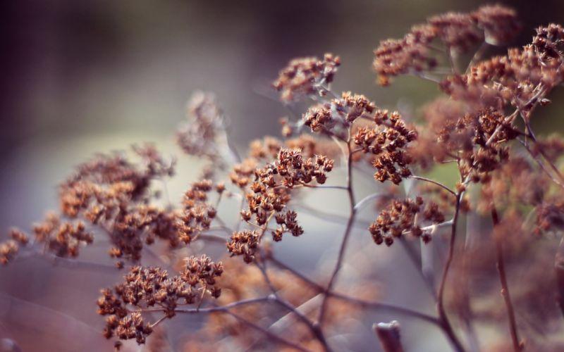 Nature spring (season) plants depth of field wallpaper