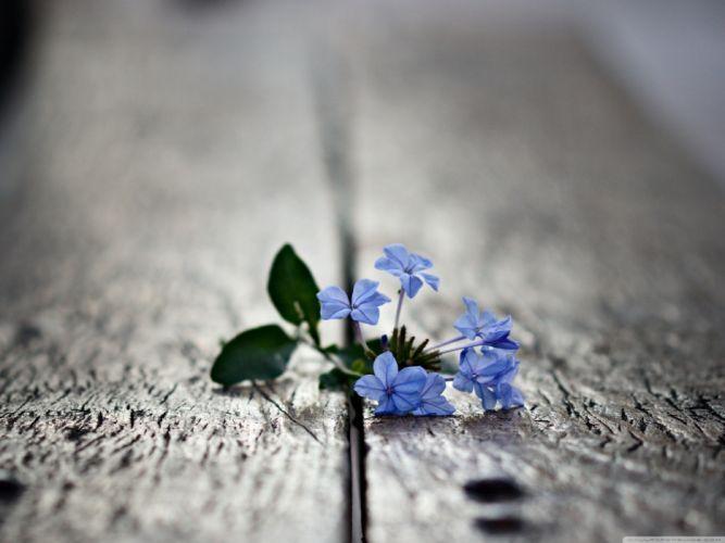 Macro blue flowers small wallpaper