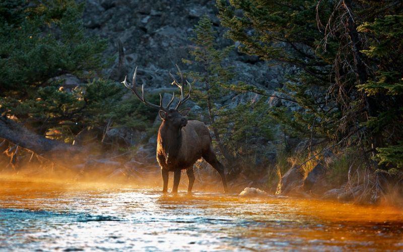 Deer rivers wallpaper