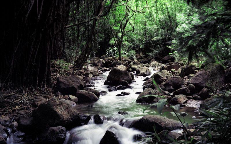 Nature streams wallpaper