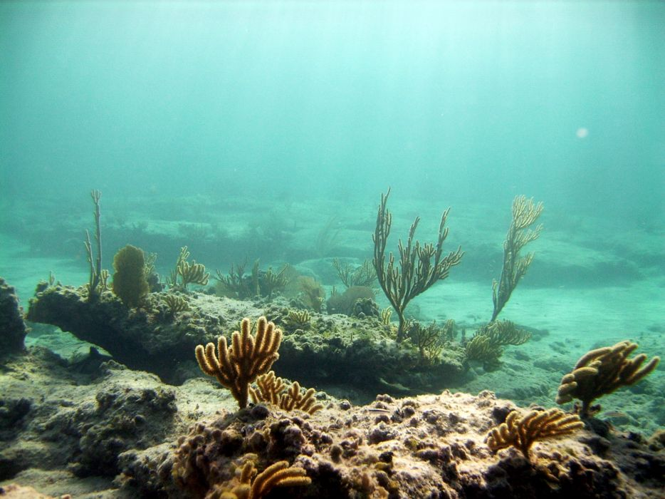 Submarine underwater wallpaper