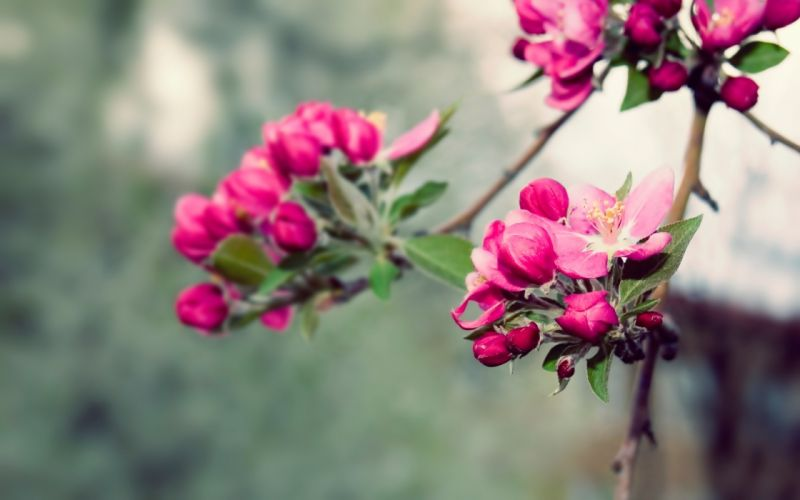 Nature flowers spring (season) blossoms wallpaper