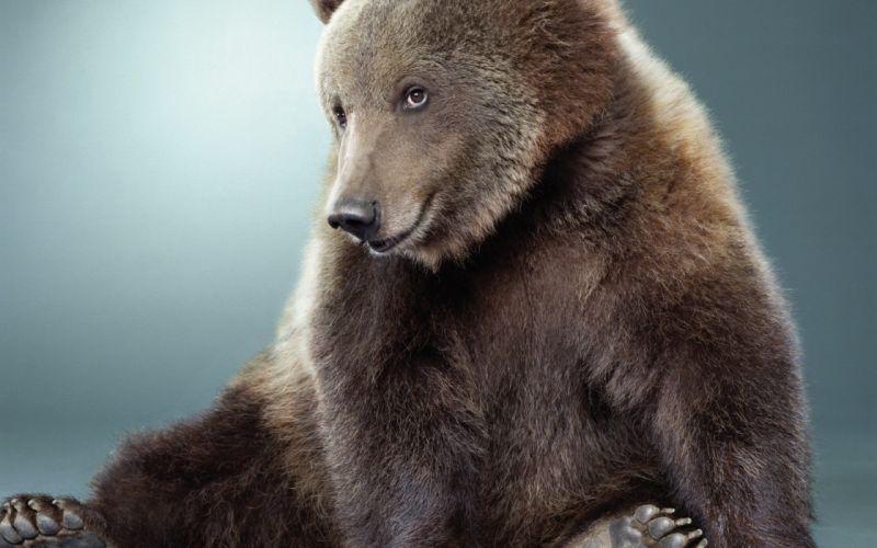 Animals humor funny smiling sitting bears wallpaper