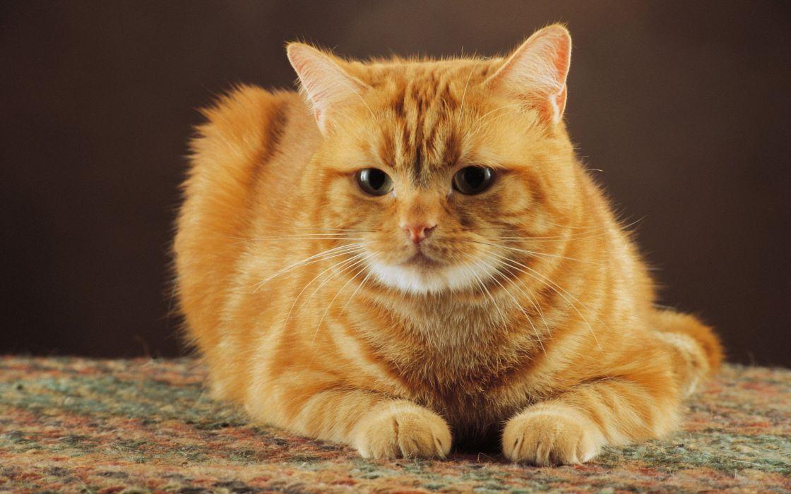 Cats animals feline kittens wallpaper