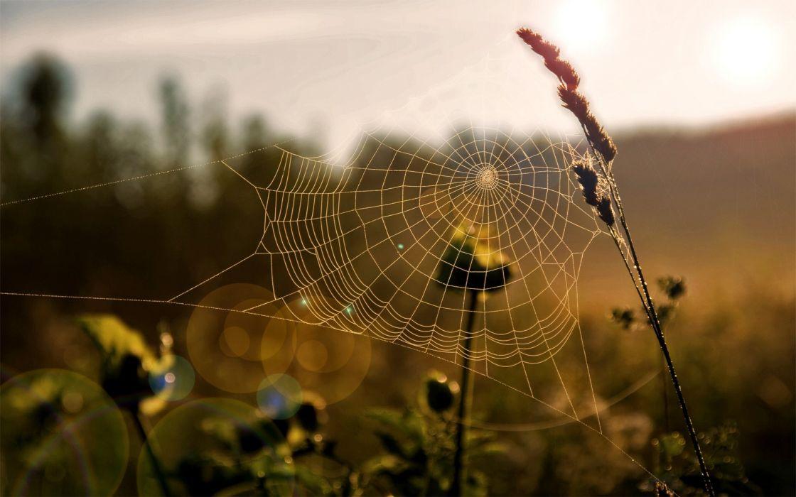 Nature spider webs wallpaper