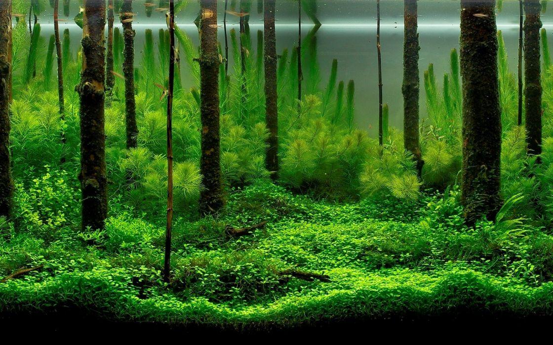 Forest aquarium wallpaper