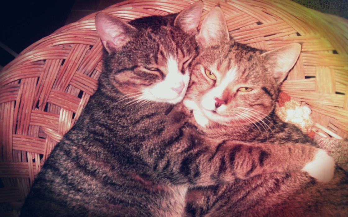 Love vintage cats animals effects pets whiskers ears brothers hugging wallpaper