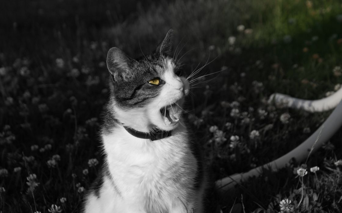 Black and white cats animals wallpaper